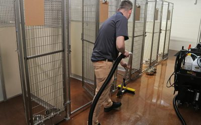 Dog Kennel Cleaning: How to Make a Pet Boarding Service Shine