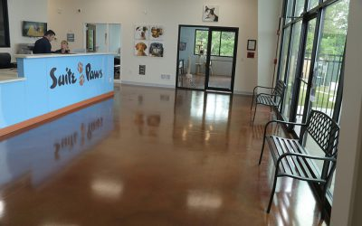 Tips for an Odor-Free Pet Care Facility
